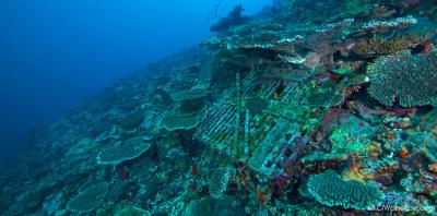 Abrolhos Eco Adventure 4 day-