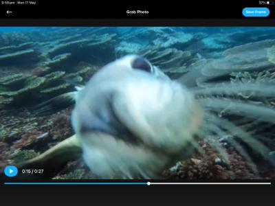 Rottnest Island scuba dive (full)