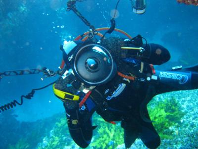Local Dive 10-30m