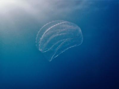 Rottnest Island scuba dive